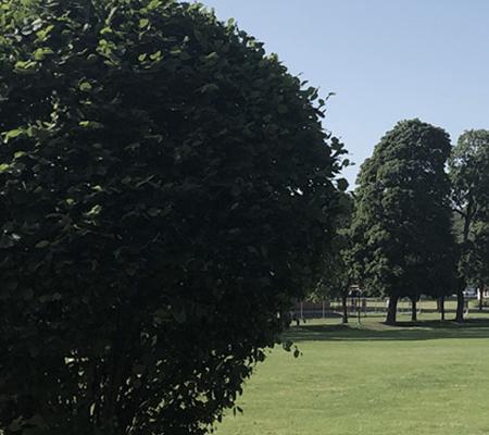 Grönområde